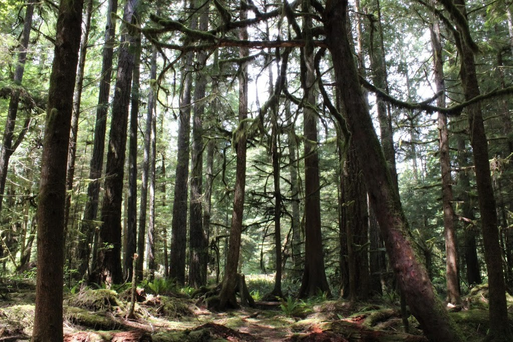 Trees, Forest, Hiking, Trails, Olympic National Park