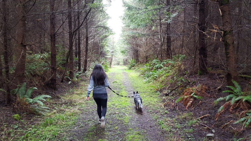 Trails, Hiking, Pet Friendly, Resort, Olympic Peninsula