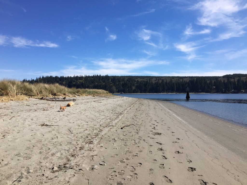 Beach, Puget Sound, Hiking, Trails