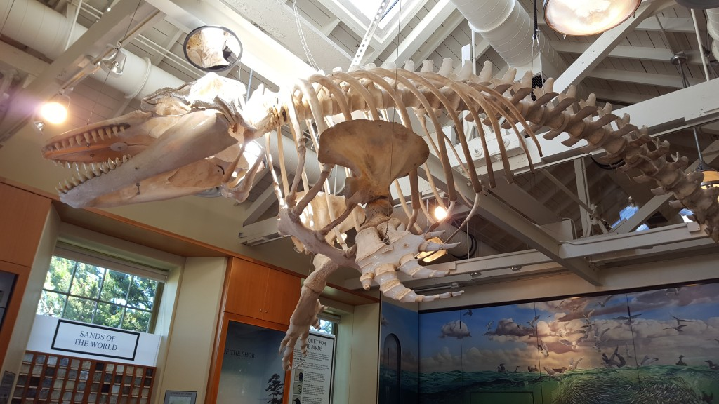 Whale, Museum, Education, Olympic Peninsula