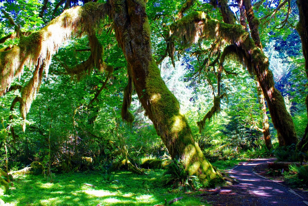 Olympic National Park, Rainforest, Olympic Peninsula