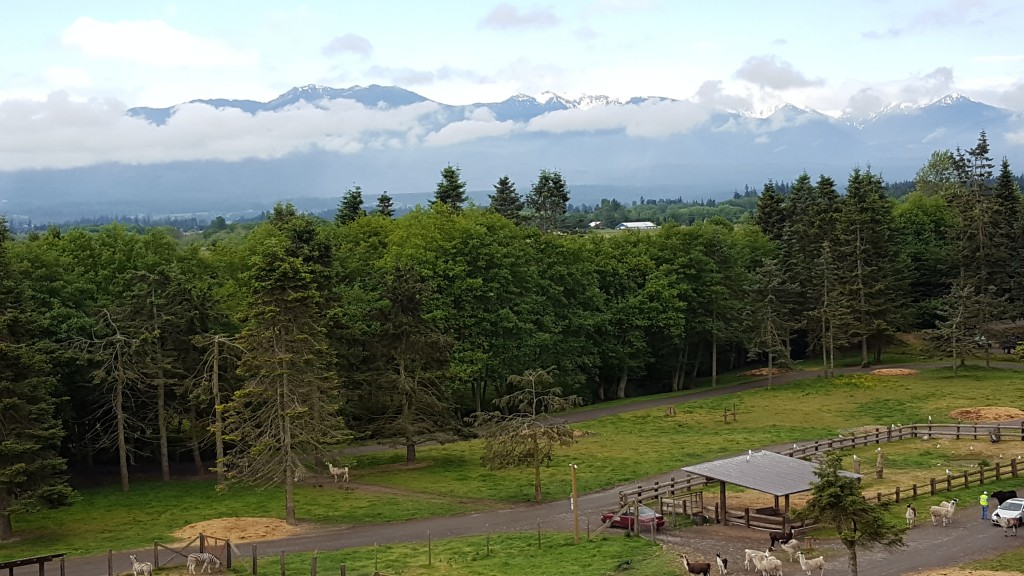 Mountains, Olympic Peninsula, Animals, Game Park