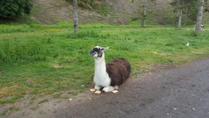 OGF Llama