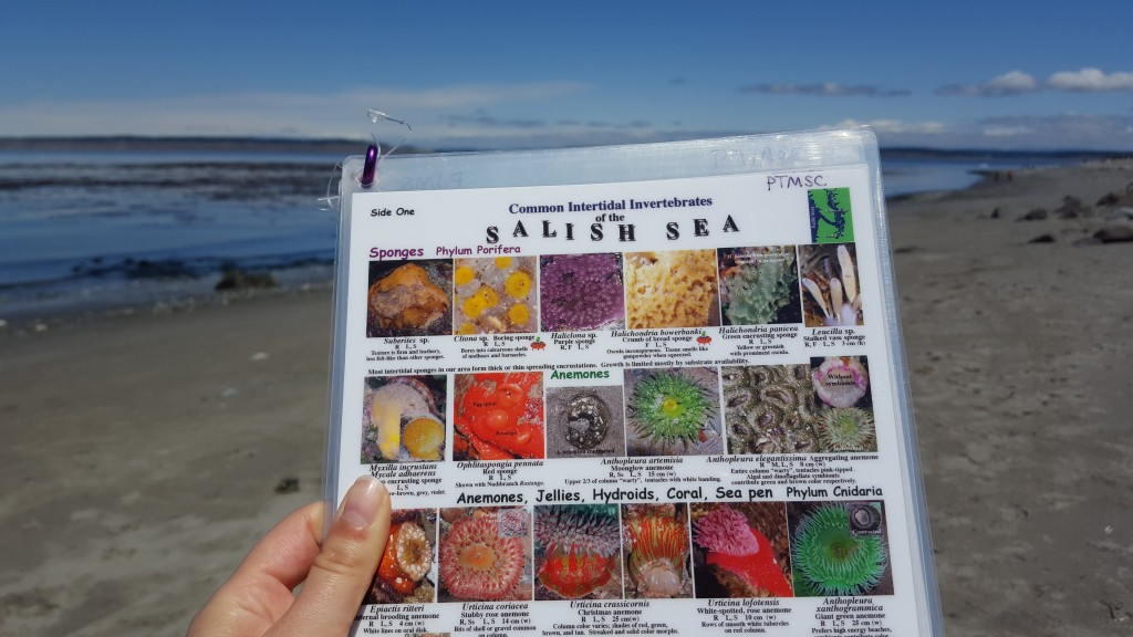 Beach, Salish Sea, Marine Life, Active Lifestyle